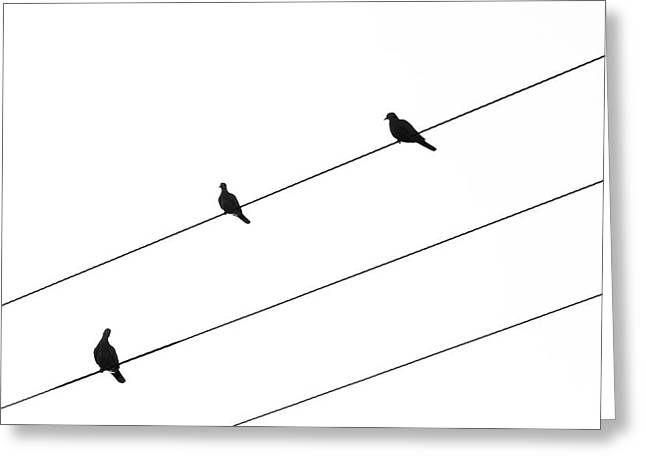 Greeting Card featuring the photograph Silhouette Of Birds Sitting On Electric Cables by Michalakis Ppalis