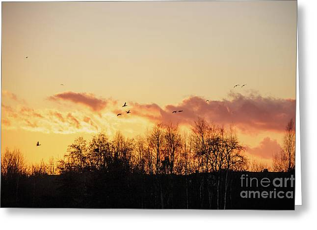 Silhouette Of Birds Wildfowl Geese Flying Off To Roost At Sunset Greeting Card