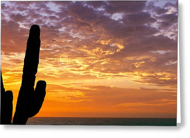 Silhouette Of Cardon Cactus Planta, Sea Greeting Card by Panoramic Images