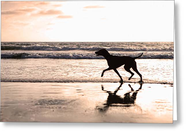 Dog Walking Greeting Cards - Silhouette of dog on beach at sunset Greeting Card by Susan  Schmitz