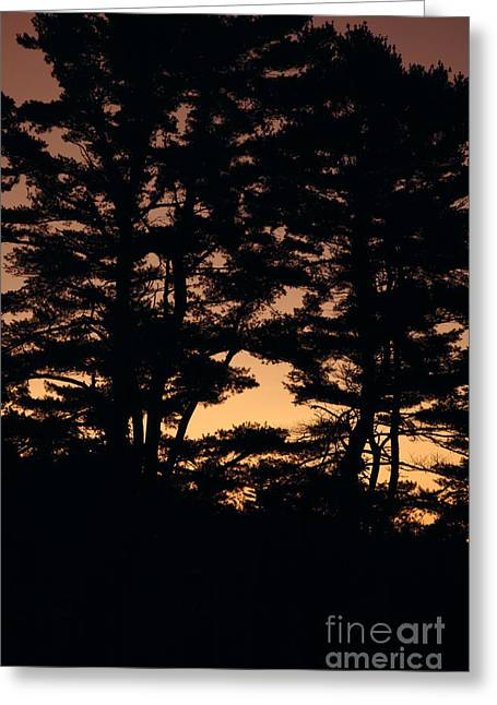 Silhouette Of Forest  Greeting Card by Erin Paul Donovan