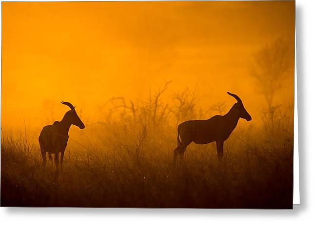 Silhouette Of Two Topi Damaliscus Greeting Card by Panoramic Images