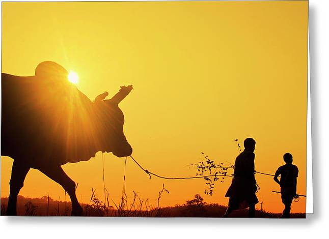Silhouette Of Two Young Boys With A Bull At Sunrise In The Countryside Of Trang, Thailand Greeting Card