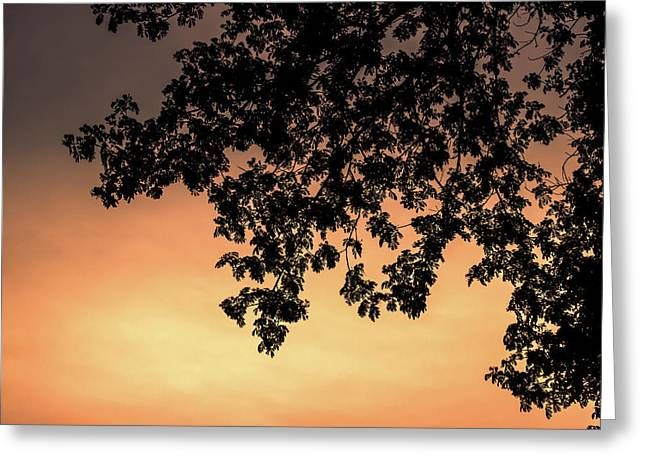 Silhouette Tree In The Dawn Sky Greeting Card