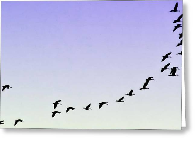 Silhouetted Flight Greeting Card by Brian Wallace