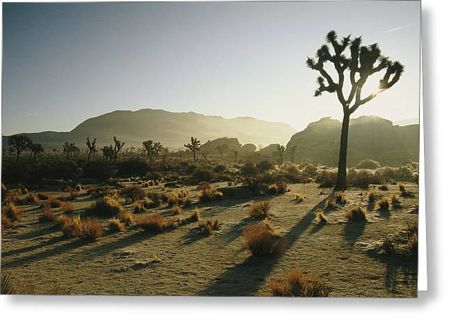 Silhouetted Joshua Trees At Twilight Greeting Card by Kate Thompson