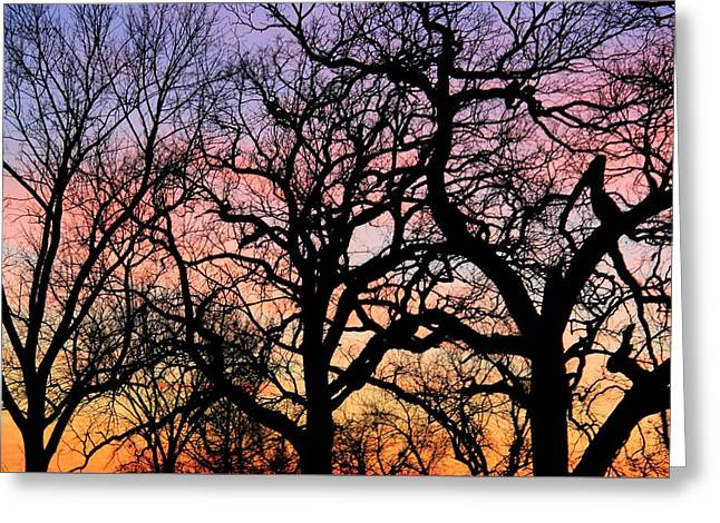 Silhouettes At Sunset Greeting Card by Chris Berry