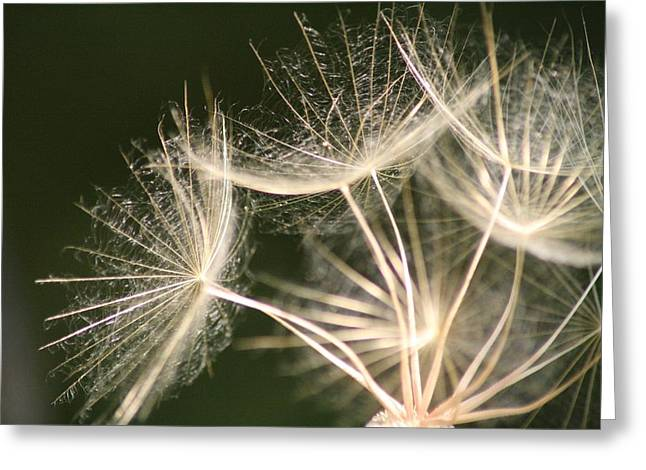 Greeting Card featuring the photograph Silken Seed Parachutes by Peg Toliver