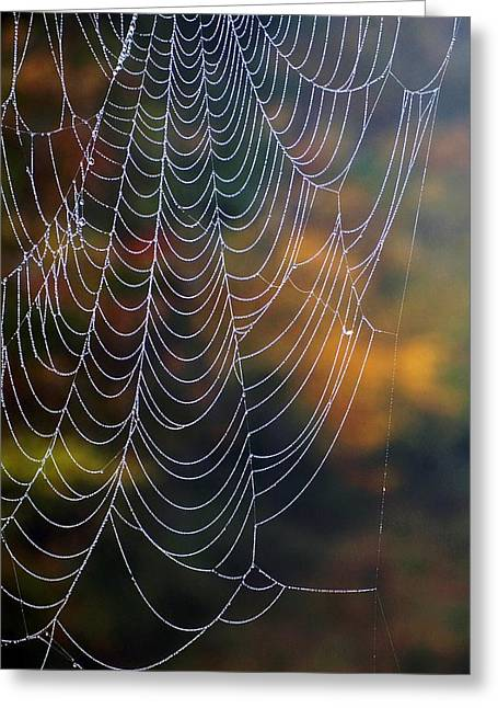Greeting Card featuring the photograph Silken Threads by Elsa Marie Santoro