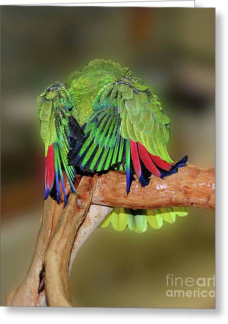 Silly Amazon Parrot Greeting Card