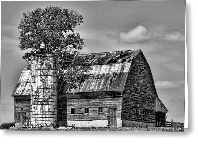 Silo Tree Black And White Greeting Card