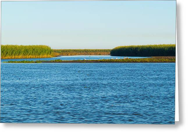 Silt Islands And Banks Mississippi River Delta Louisiana Greeting Card
