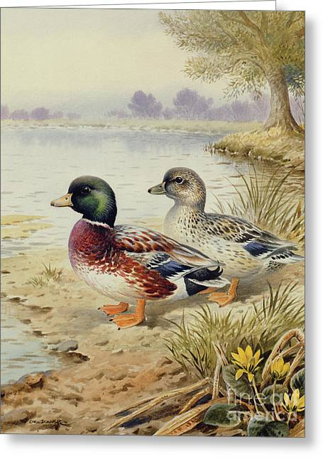 Silver Call Ducks Greeting Card by Carl Donner