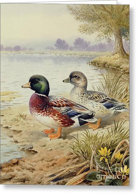 Silver Call Ducks Greeting Card