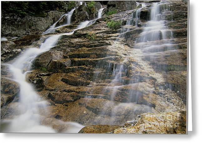 Silver Cascades - Crawford Notch New Hampshire Greeting Card by Erin Paul Donovan