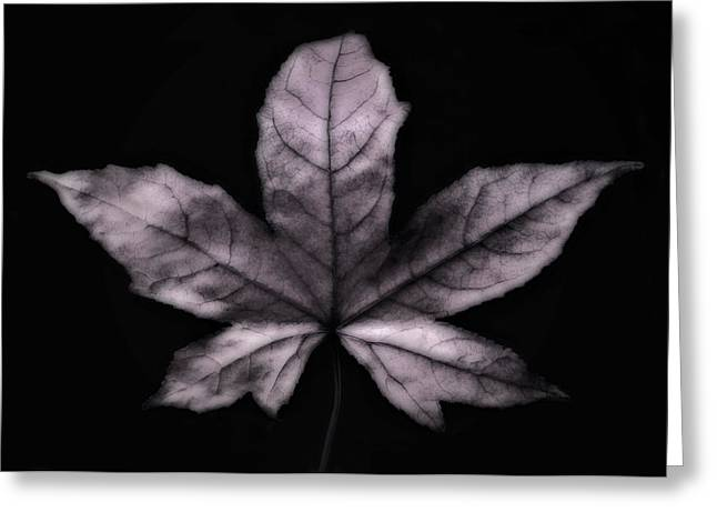 Silver Leaf Greeting Card by Artecco Fine Art Photography