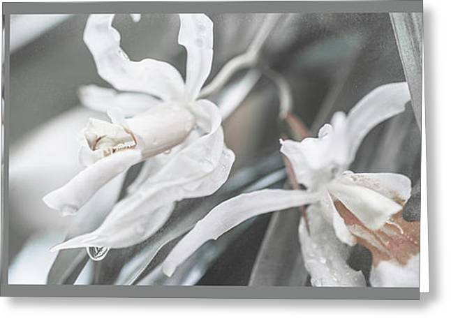 Silver Melody. Triptych Greeting Card