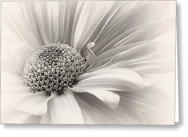 Greeting Card featuring the photograph Silver Mist by Darlene Kwiatkowski