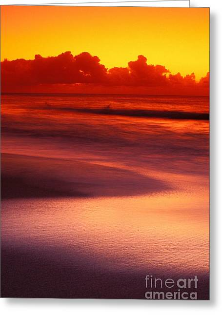 Silver Reflections Greeting Card by Vince Cavataio - Printscapes