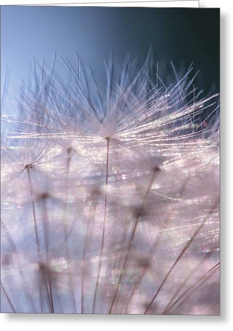 Silver Shine Dandelion Greeting Card by Natalya Myachikova