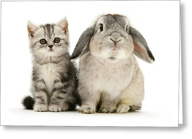 Silver Tabby And Rabby Greeting Card