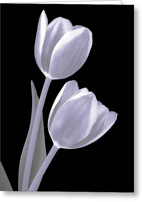 Silver Tulips Greeting Card