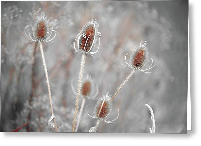 Silver Voices Of Wild Grass Greeting Card