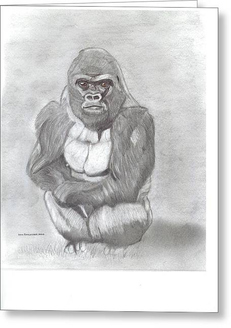 Northern Africa Drawings Greeting Cards - Silverback Gorilla Greeting Card by Don  Gallacher