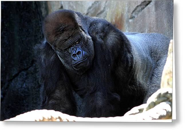 Silverback Kibabu Rules His Kingdom Greeting Card
