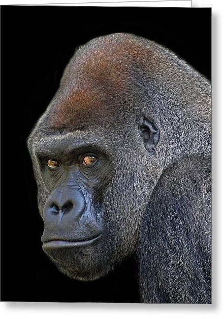 Silverback Lowland Gorilla Greeting Card