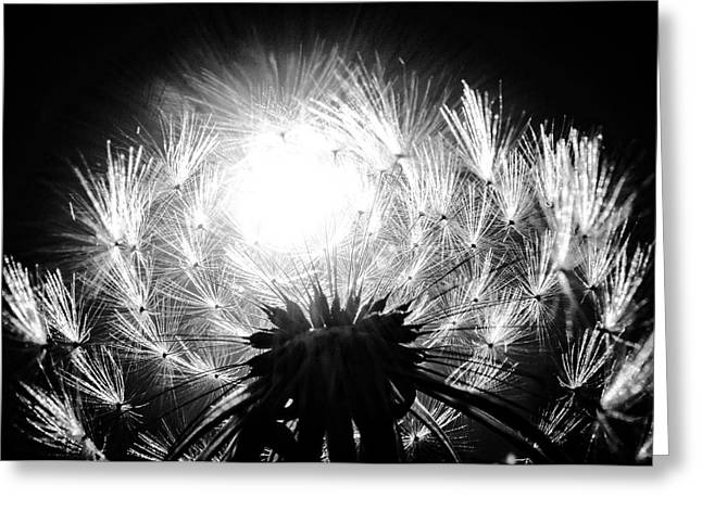Silvered Dandelion Greeting Card by LeAnne Perry
