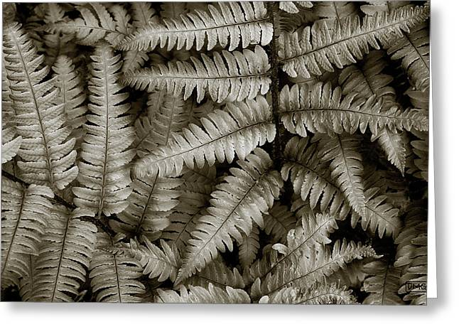 Silvery Ferns Greeting Card