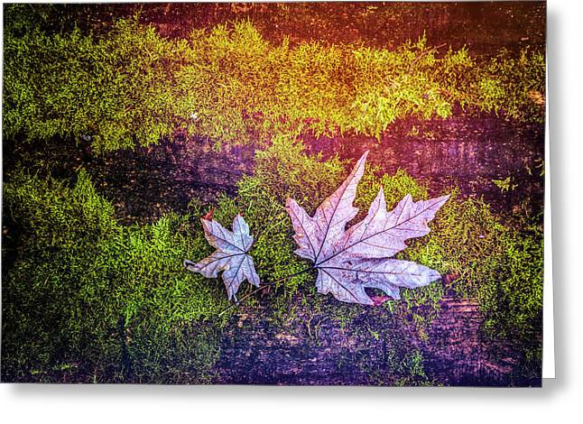 Silvery Maples In Rainbow Colors Greeting Card