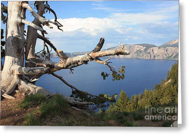 Silvery Tree Over Crater Lake Greeting Card by Carol Groenen