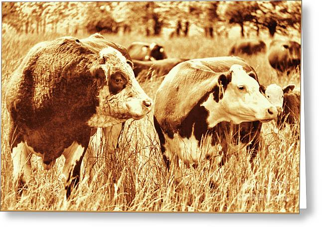 Simmental Bull 3 Greeting Card by Larry Campbell