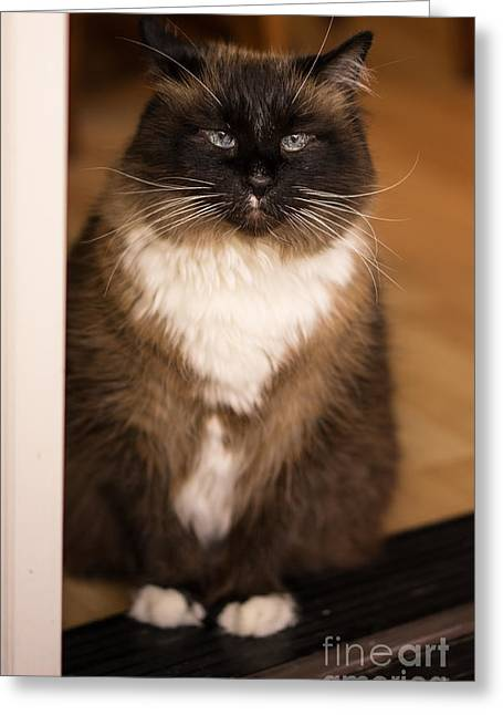 Simon The Cat In The Doorway Greeting Card by Mike Reid