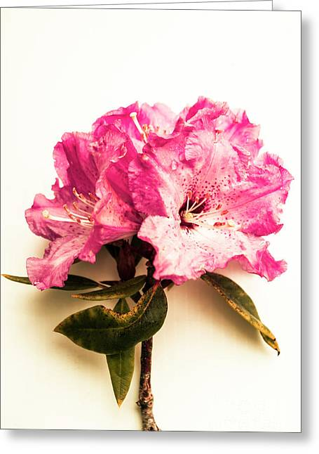 Simple Beauty Greeting Card by Jorgo Photography - Wall Art Gallery