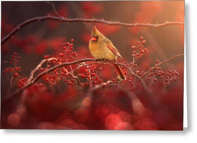 Simple Beauty Greeting Card by Rob Blair
