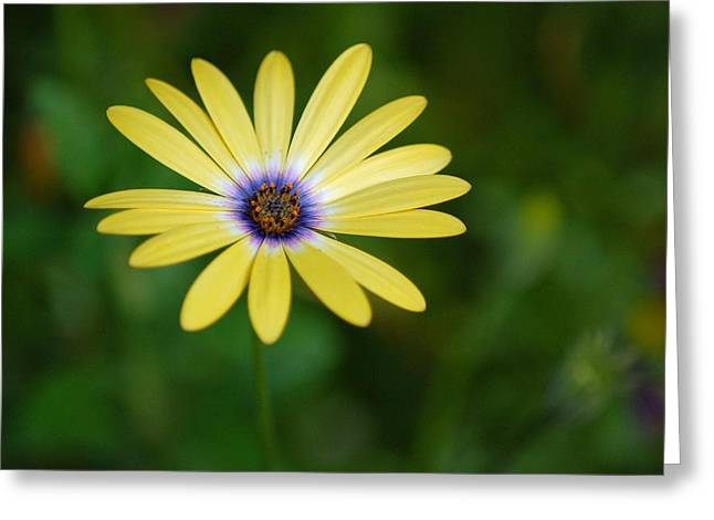 Simple Flower Greeting Card by Jennifer Englehardt