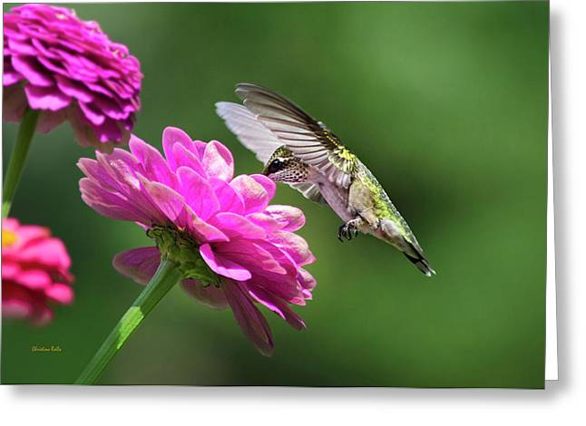 Greeting Card featuring the photograph Simple Pleasure Hummingbird by Christina Rollo