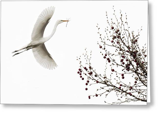 Greeting Card featuring the photograph Simplicity by Melinda Hughes-Berland