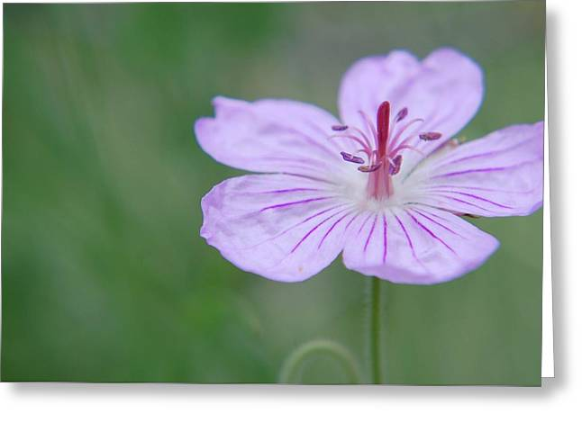 Greeting Card featuring the photograph Simplicity Of A Flower by Amee Cave