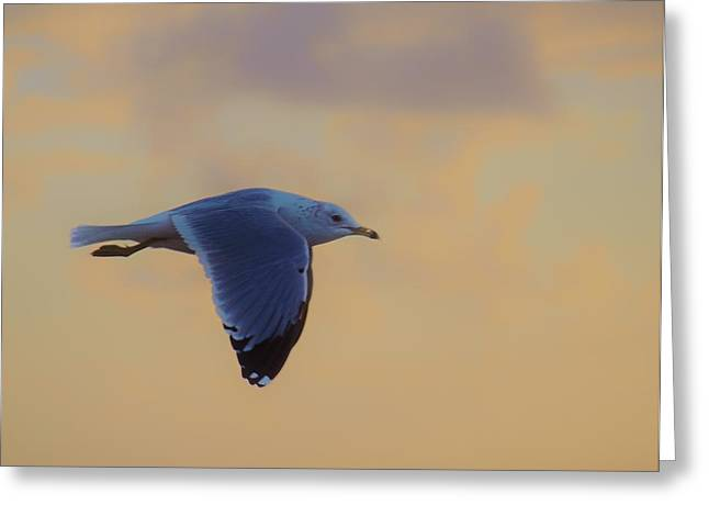 Simply Flying Greeting Card