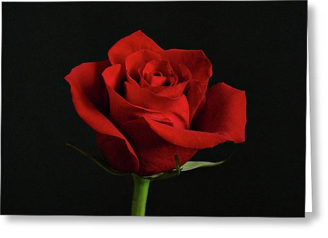 Simply Red Rose Greeting Card by Sandy Keeton