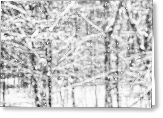 Simply Snowing Greeting Card by Sue OConnor
