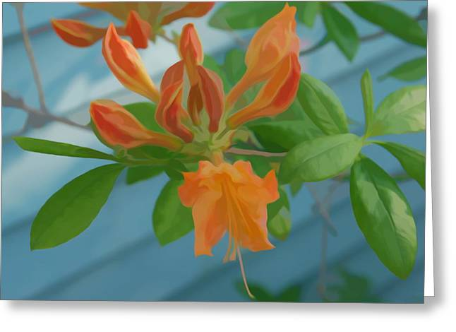Greeting Card featuring the photograph Simply Soft Budding Azalea by Aimee L Maher Photography and Art Visit ALMGallerydotcom