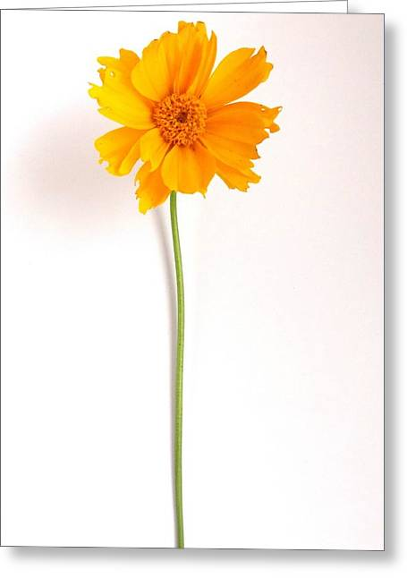 Simply Sunny Greeting Card by Fred Wilson