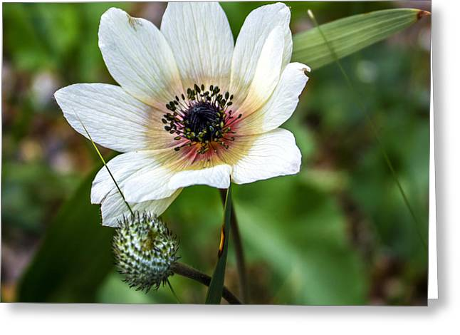 Simply White Flower Greeting Card by Martin Newman