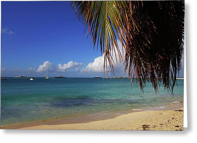 Simpson Bay Palm Tree Caribbean St Martin Greeting Card by Toby McGuire