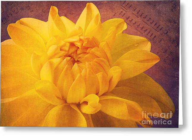 Sinfonie Greeting Card by Angela Doelling AD DESIGN Photo and PhotoArt